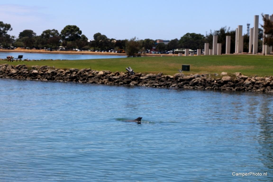 Dolfijn, vlak bij ons logeeradres