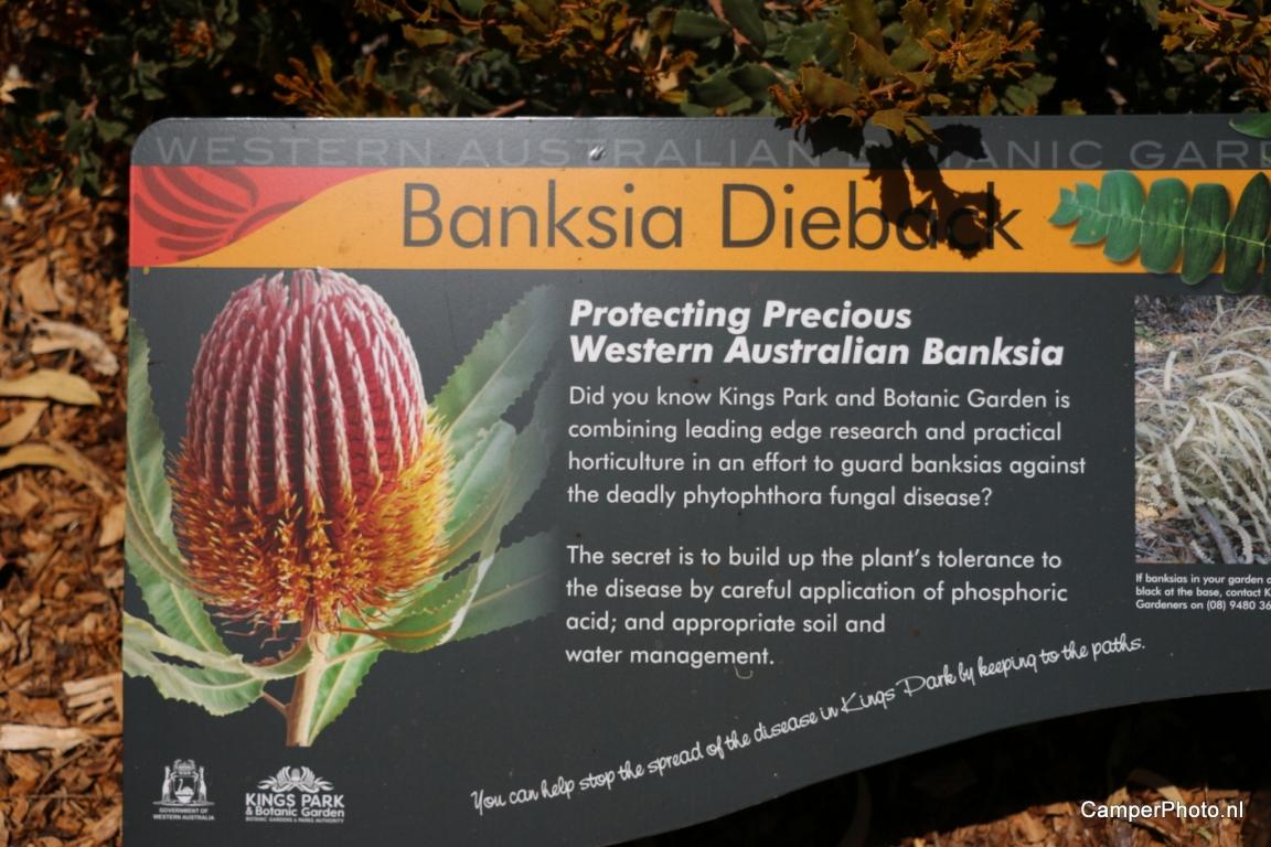Kings Park - Botanic Garden Perth